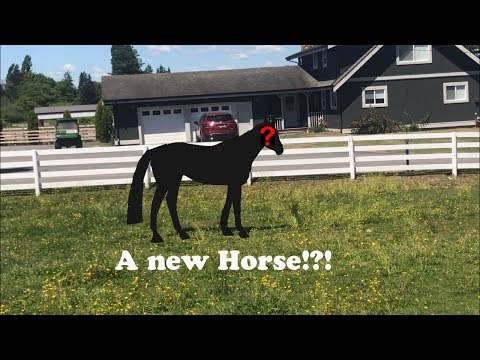 New Saddle Test Ride & A NEW HORSE?!