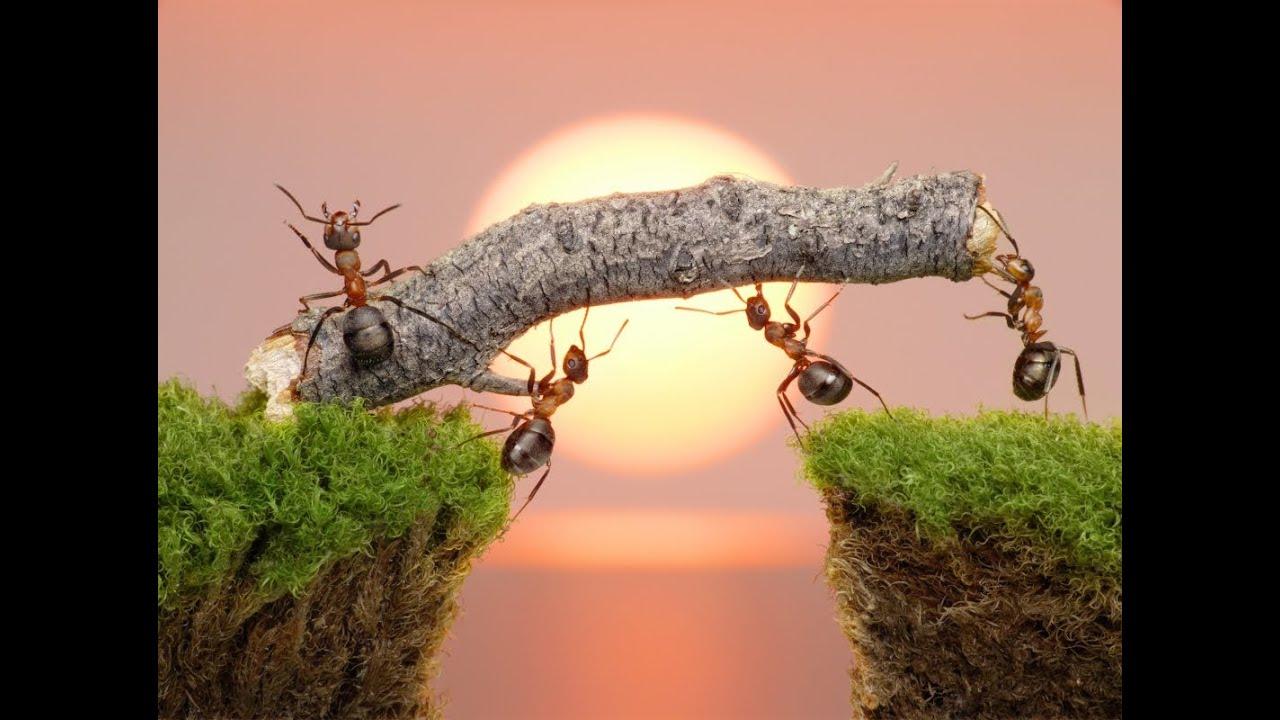 Interpretar sueños - Significado de soñar con hormigas ...
