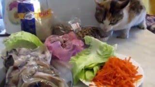 Животные. Чем кормить домашнюю кошку? Рацион моих кошек