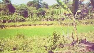 10.7 Hectares (Rice Field and Dry Land) FOR SALE