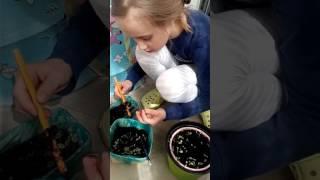 Выращиваем на балконе листья салата 15.04.17