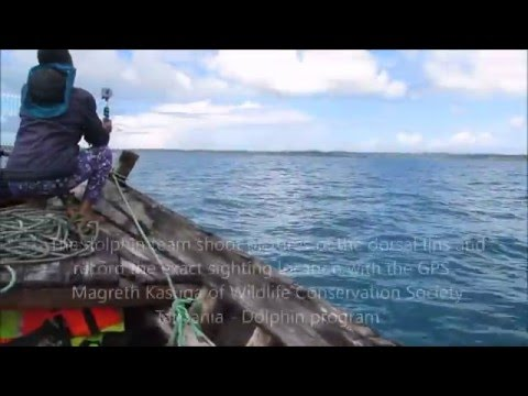 Dolphins of Tanzania by Rupi Mangat with Wildlife Conservation Society