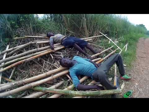 Fish Farming in the bush of Togo EP 2.