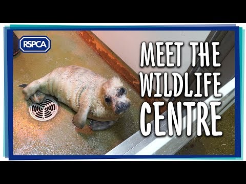 Meet the Wildlife Centre - What is your favourite species?