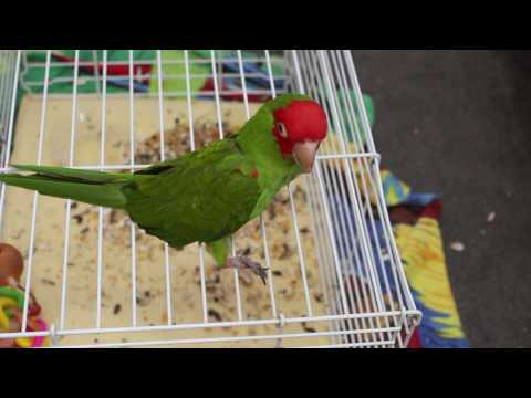 hqdefault Handicapped Bird Videos   What our birds teach us about disabilities