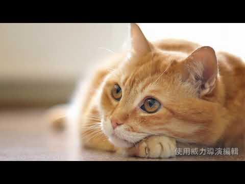 貓咪催眠曲!寵物放鬆音樂ʕ •̀ O •́ ʔ