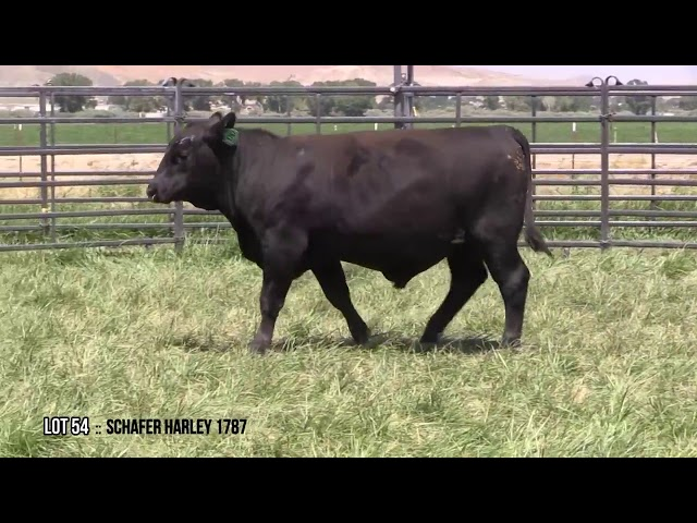 Mid Valley Bull Sale Lot 54