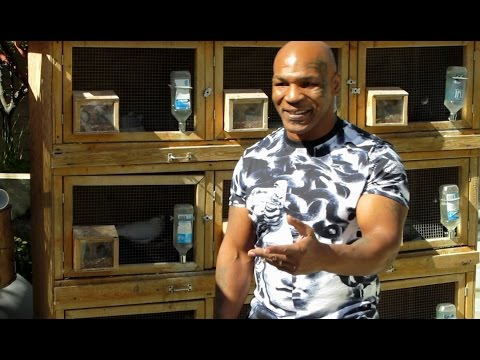 Mike Tyson NEW at Home Talking Pigeons