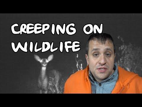 Creeping on Wildlife V