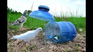 Awesome Quick Bird Trapping Using Plastic Bottle - How To Make Bird Trap With Water Plastic Bottle