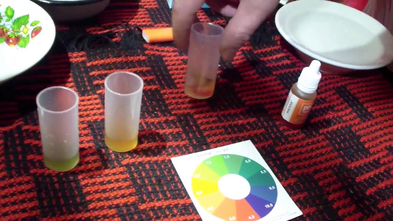 Сбор лечебных ольховых шишек - YouTube