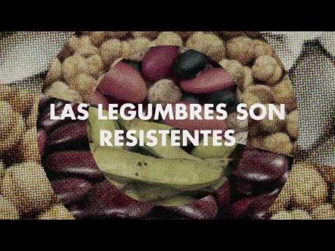 Un viaje alrededor del planeta a través de las legumbres FAO