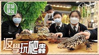 Publication Date: 2021-06-27 | Video Title: 觀塘慕光英文書院斥資200萬起亞馬遜生物教室校內飼養20多隻