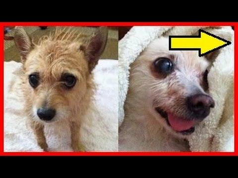 Como eliminar el mal olor a perro youtube