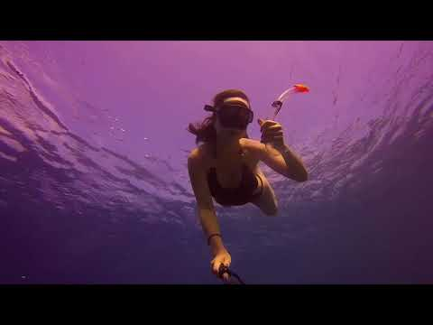 Diving with Ali Family