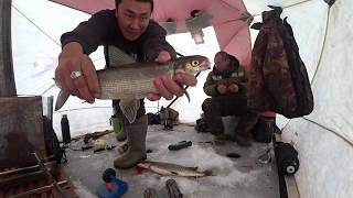 Всегда с Вами Клёвая рыбалка в Якутии! Cool fishing in Yakutia