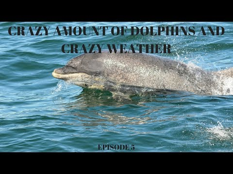 Crazy amount of dolphins and crazy weather (Farne Islands) Episode 5