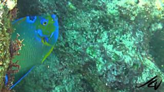 Eel, French Angel Fish - Grand Sirenis Mayan Beach Riviera Maya