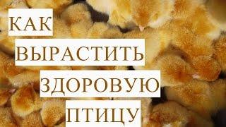 Как Вырастить Здоровую Птицу. Цыплята. Индюшата.