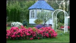 Почвопокровные розы в ландшафном дизайне сада