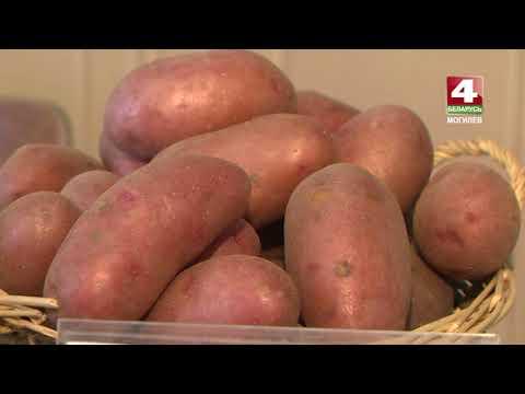 Вопрос: Сорт картофеля Барс описание, характеристики, отзывы какие?