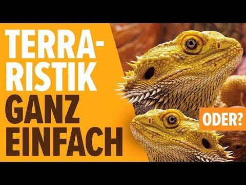 Terraristik Ganz Einfach, Oder? | NORBERT ZAJAC | Zoo Zajac, Duisburg