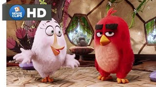 The Angry Birds Movie Hindi (03/14) Anger Management Class Scene MovieClips