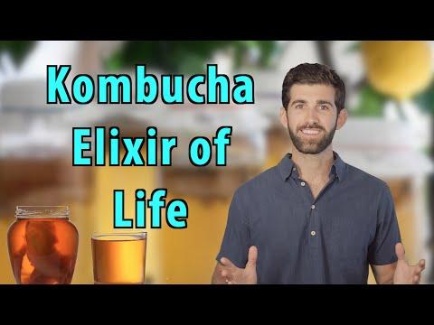 Top 5 Reasons to Drink Kombucha Everyday