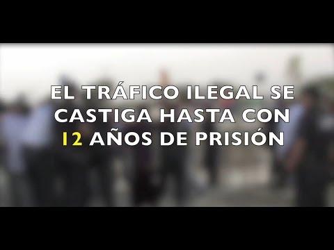 ¡Si nacieron libres, déjalos ser libres! PROFEPA al combate del tráfico ilegal de especies.