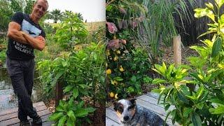 Growing Avocado Trees In Arizona