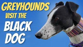 Greyhounds visit the Black Dog