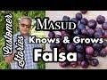 Customer Stories- Masud grows Falsa in Texas!