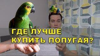 Где купить попугая - мой опыт выбора питомника.