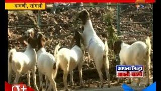 Sangli : Tejas Lengre Succes In Goat Farming