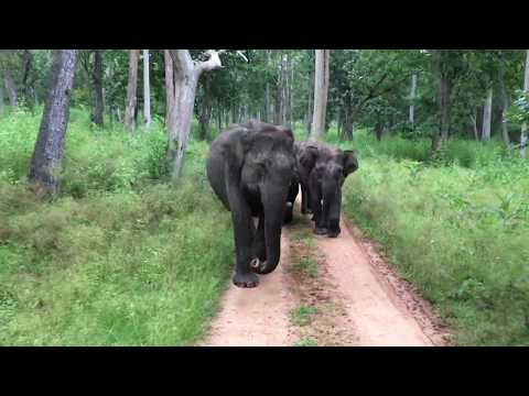 Nagarhole National Park - Charged By A Herd of Elephants