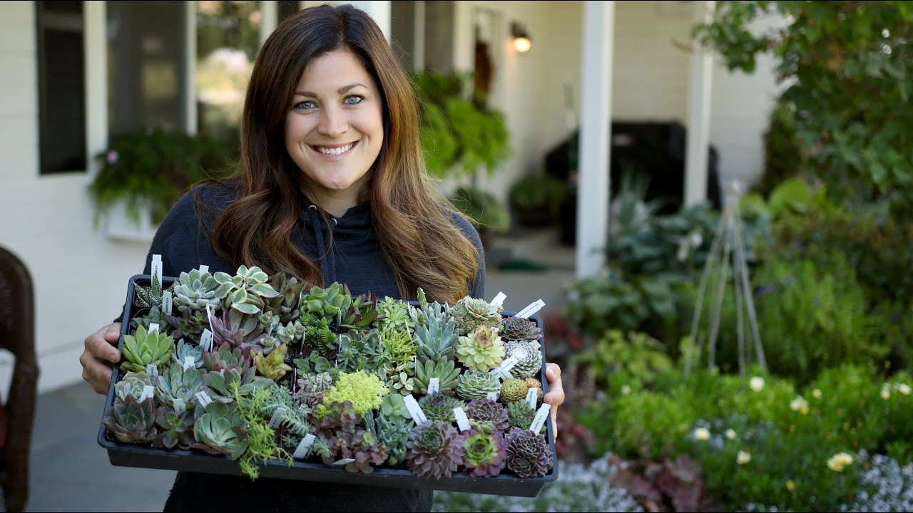 unboxing-succulents-from-mountain-crest-gardens-garden-answer