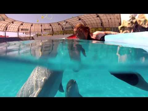 Добрая песня о дельфинах