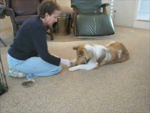 Puppy Dog Learns Dog Trick Cross Paws