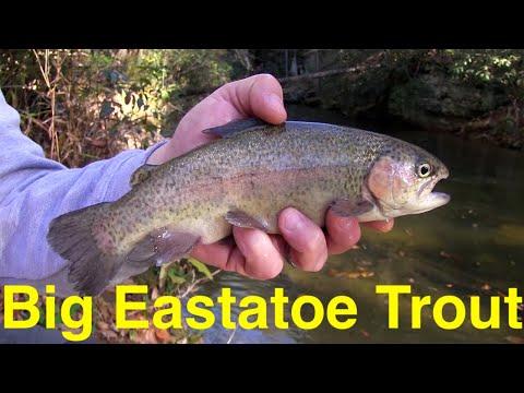 Big Eastatoe Trout Fishing