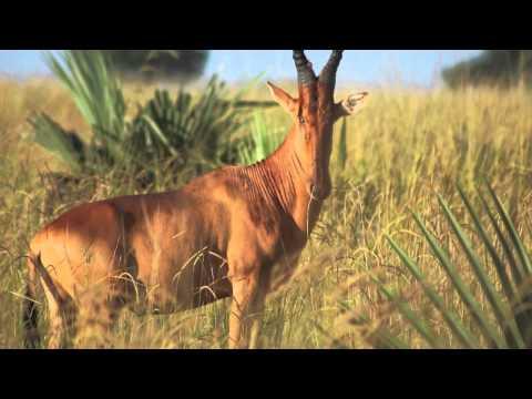 Africa Uganda Beautiful Pictures of Landscape And Safari At Murchison-Falls Nationalpark