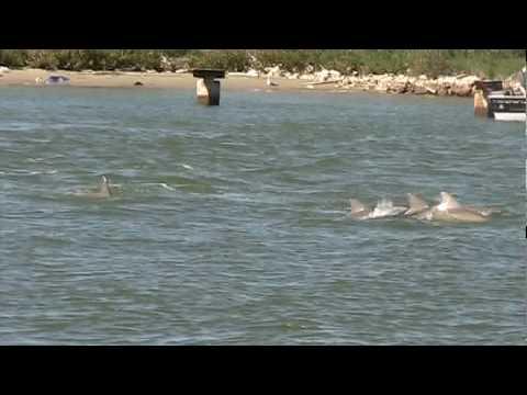 Kohootz Dolphin Tour 2 Port Aransas Texas Youtube