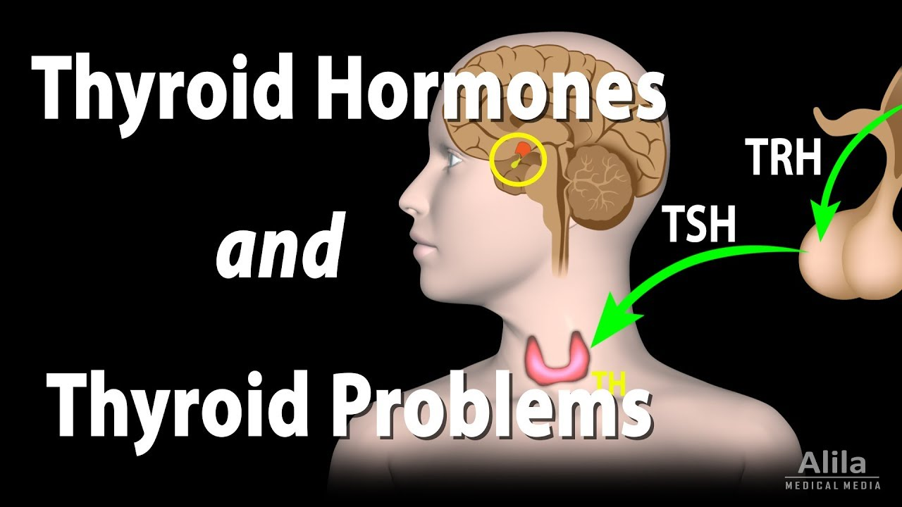 Thyroid Gland Hormones And Thyroid Problems Animation Youtube