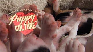 A Look Inside Puppy Culture www.PuppyCulture.com