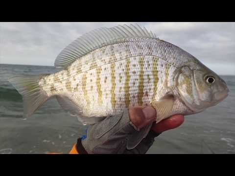 Central Coast Fly Fishing 2015
