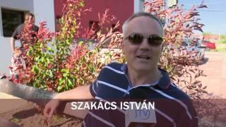 JTV Híradó 2016/15 - 2016.04.17.