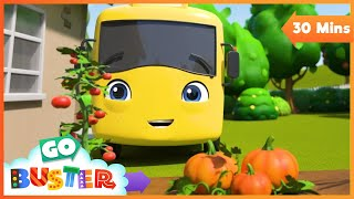 Buster the Gardener - Buster and Friends Grow Vegetables at Home | Go Buster - Cartoons for Kids