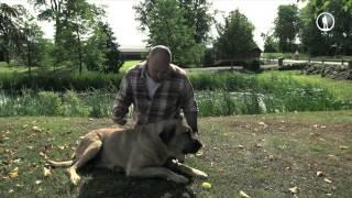 Планета собак. Датский брохольмер