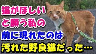 【猫の不思議な話】猫がほしいと願う私の前に現れたのは汚れた野良猫だった…。