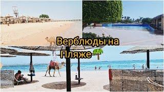 Египет 2020 СЕНТЯБРЬ Обзор пляжа и территории отеля от ресторана до номера Верблюды на пляже