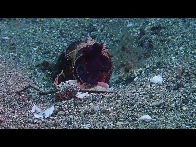 anilao scuba diving center(アニラオ)
